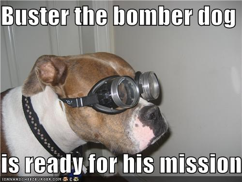 Buster the bomber dog is ready for his mission