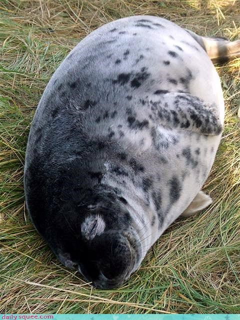 anything asleep baby being cute doing important lump rationale remember seal sleeping something - 4676596480