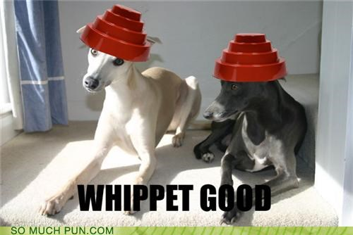 album,are we not men,Devo,dogs,Hall of Fame,hat,hats,homophone,homophones,title,we are devo,whip it,whippet