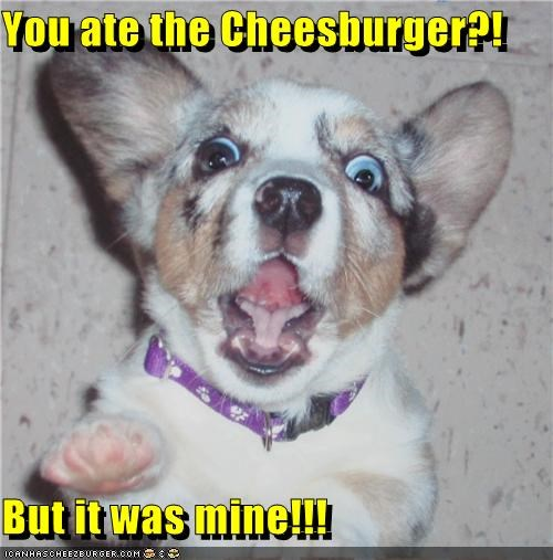 Cheezburger Image 4678039296