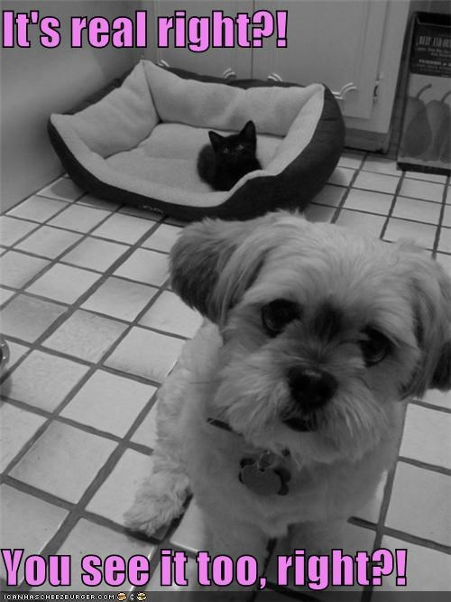 also asking cat maltese puppy question real right see too you - 4678519552