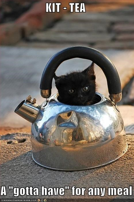 any caption captioned cat homophone kettle kitty meal must have portmanteau pun tea tea kettle - 4678540288