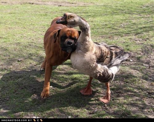 blind,boxer,friend,goose,guide,news,service,story