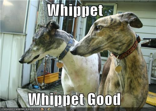 best of the week Devo good Hall of Fame i has a hotdog lyric pun song whip it whippet whippets - 4679381504