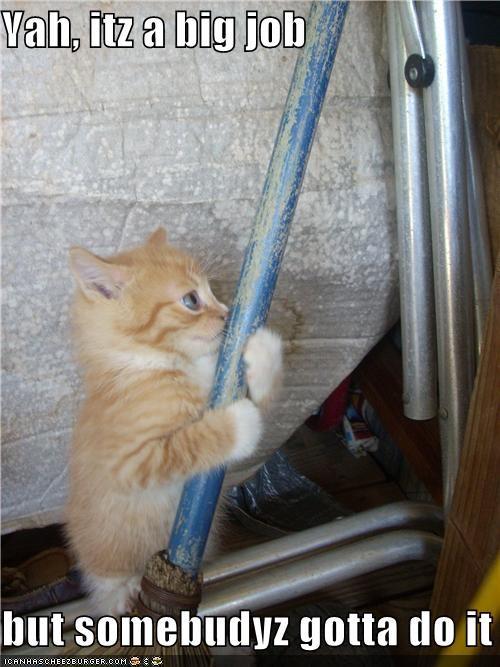 big broom caption captioned cat do it gotta job kitten needs somebody sweeping task tiny - 4679459328