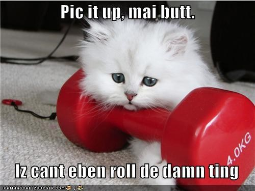cant caption captioned cat heavy kitten lifting pick picking up roll Sad thing unhappy upset weight - 4679517184