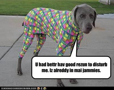 already,better,Disturb,dressed up,good,have,in,pajamas,reason,weimaraner
