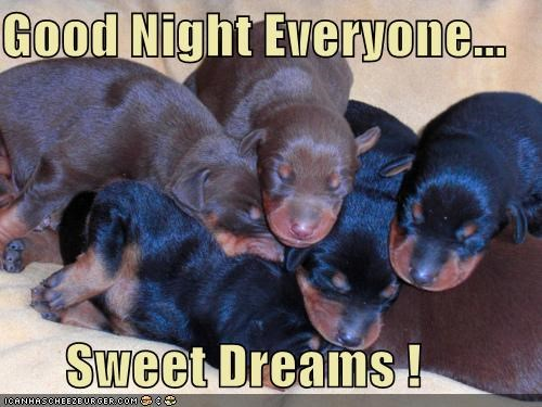 asleep dreams everyone good night pile puppies puppy sleeping sweet sweet dreams whatbreed - 4679803648