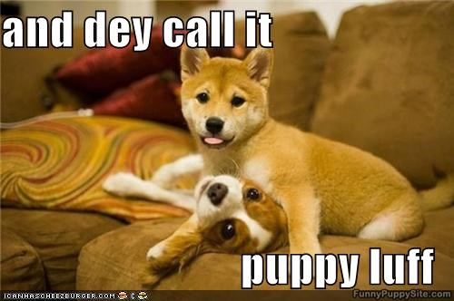 dog meme about puppy love