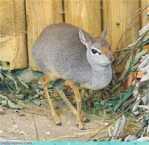 dik dik,end,foot,goodbye,in front,instructions,one,other,squee spree,walking