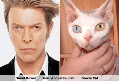 Bowie Cat Cats classics david bowie eyes musicians - 4680061952