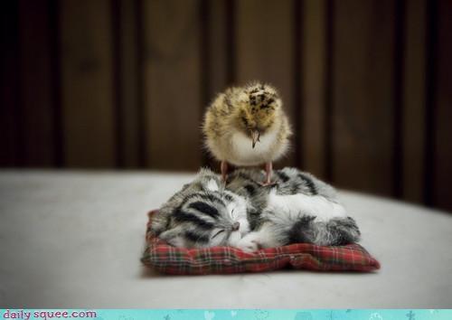 baby cat chick friends friendship interspecies friendship itty bitty kitten song soundtrack - 4680172800