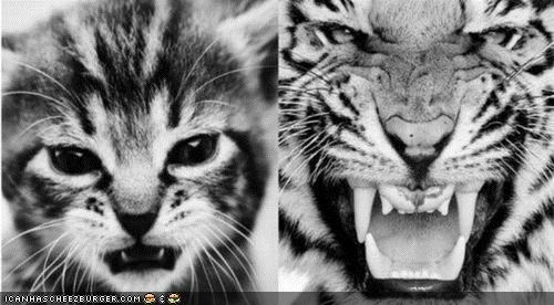black and white,cyoot kitteh of teh day,fierce,grow up,kitten,tigers