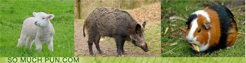 boar guinea pig lamb lamborghini literalism paneled portmanteau sequence