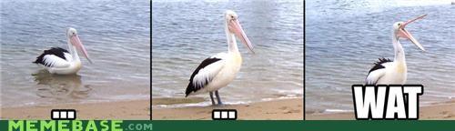 Memes ocean pelican triptych wat - 4680576512