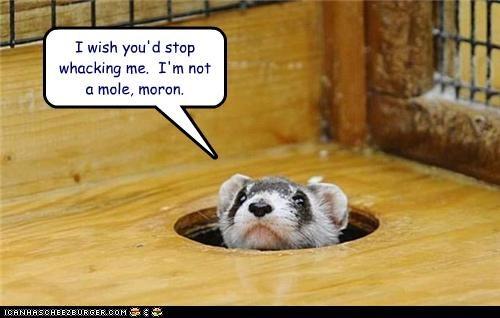 I wish you'd stop whacking me. I'm not a mole, moron.