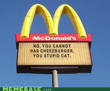 Cats cheezburger fake and gray IRL lol Memes - 4680676096
