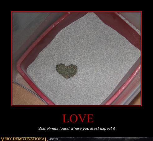 box heart kitty litter love