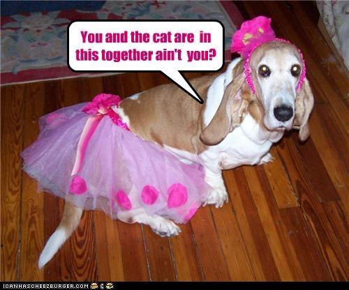 basset hound cat conspiracy costume - 4681269248