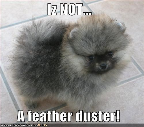 clarification,clarifying,denial,do not want,duster,feather,feather duster,not,puppy,upset,whatbreed