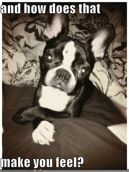 asking,boston terrier,concerned,feel,feeling,how,listening,make,question,therapist,therapy