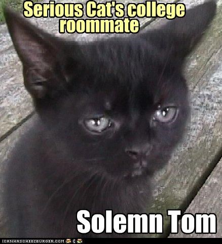 Serious Cat's college Solemn Tom roommate