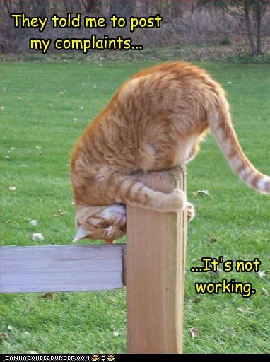 caption captioned cat complaints double meaning FAIL instructions misinterpretation not post pun tabby working - 4683491840