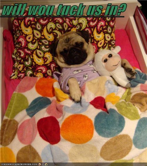 Cheezburger Image 4683643392