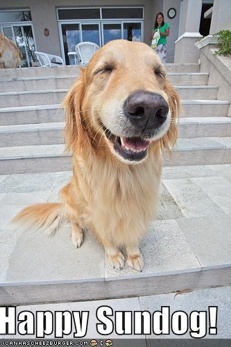 golden retriever happy Sundog - 4683791104