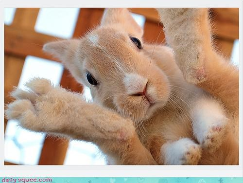 acting like animals bunny confused easter effigy egg explanation happy easter hope hoping laid optimism rabbit - 4683856384