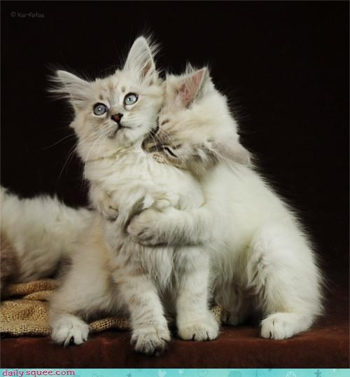 cat Cats Hall of Fame hugging kitten love shocked surprised wide eyed - 4684033024