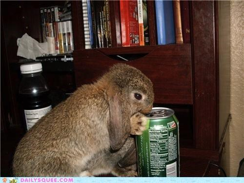 bunny caffeine do want drinking happy bunday mountain dew rabbit reader squees - 4684046848