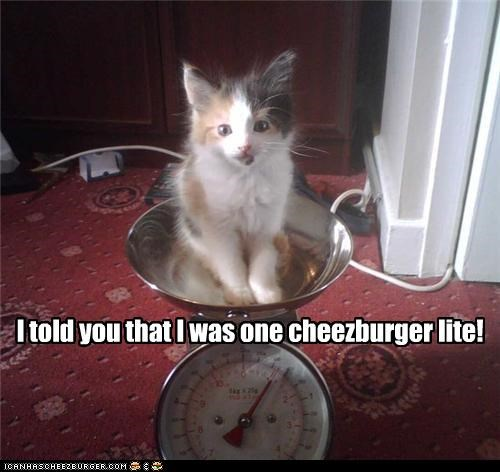 Cheezburger Image 4685209344