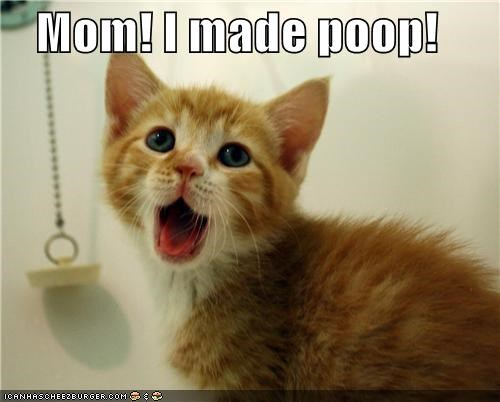 bathroom caption captioned cat excited fyi happy kitten made mom poop tabby yelling