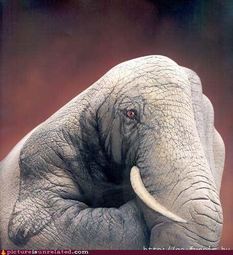 elephant hand paint wtf - 4685320704