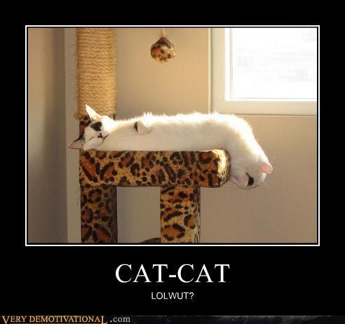 cat head lol no tail wtf - 4685506304
