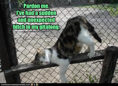 caption,captioned,cat,fence,gitalong,hitch,movement,pardon me,stopped,stopping,stuck,sudden,unexpected