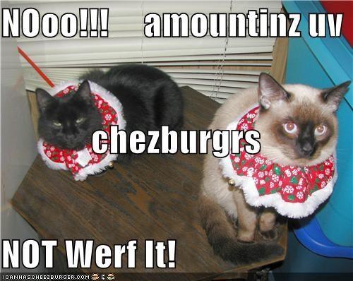 Cheezburger Image 4686343168