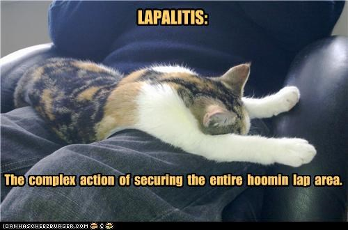 action,Area,caption,captioned,cat,complex,definition,disease,entire,human,lap,laying,securing,stretching