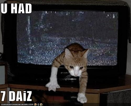 caption captioned cat crawling days film had I Can Has Cheezburger Movie seven television the ring TV warning - 4686408192