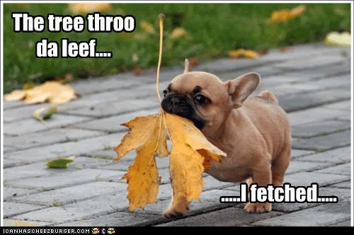 The tree throo da leef.... .....I fetched.....
