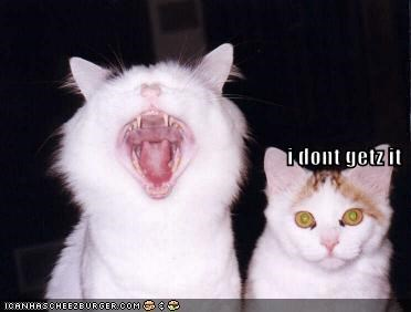 cat lolcats - 468677376