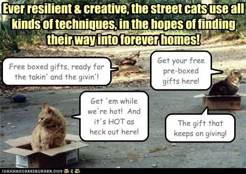 Ever resilient & creative, the street cats use all kinds of techniques, in the hopes of finding their way into forever homes! Free boxed gifts, ready for the takin' and the givin'! Get your free pre-boxed gifts here! Get 'em while we're hot! And it's HOT as heck out here! Ever resilient & creative, the street cats use all kinds of techniques, in the hopes of finding their way into forever homes! The gift that keeps on giving!