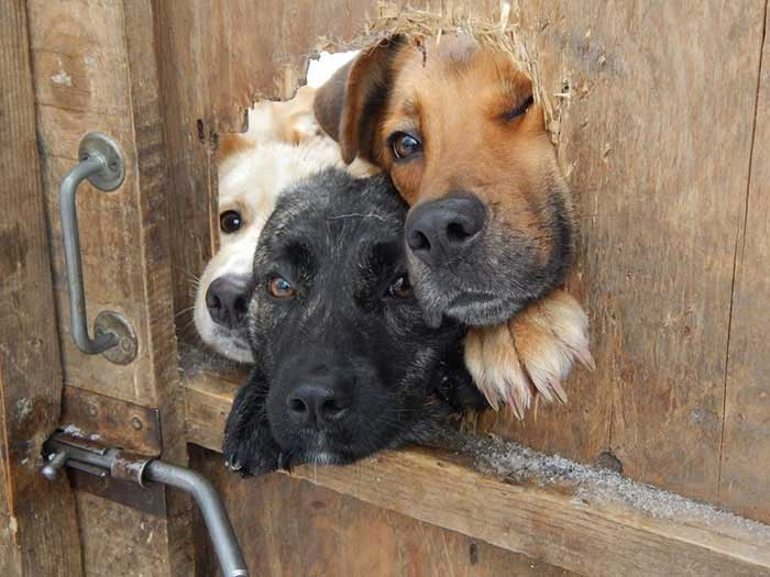 cute dogs looking through fences