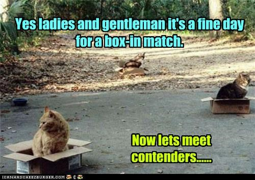 Yes ladies and gentleman it's a fine day for a box-in match. Now lets meet contenders......