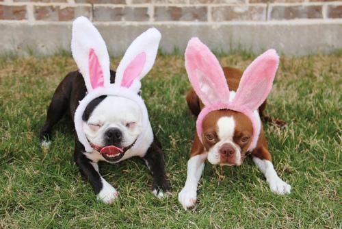 doggeh easter Sundog - 4688800512