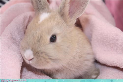 age baby blooming bunny Fluffy old poppy pun rabbit reader squees seven week - 4689184256