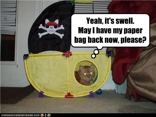 annoyed back bag caption captioned cat now paper paper bag please question sarcastic ship swell tabby toy - 4689541888