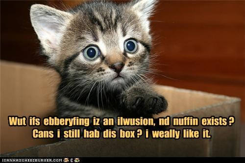 afraid,asking,box,caption,captioned,cat,confused,do want,everything,exists,illusion,kitten,like,nothing,question