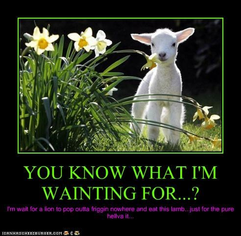 YOU KNOW WHAT I'M WAINTING FOR...? I'm wait for a lion to pop outta friggin nowhere and eat this lamb...just for the pure hellva it...